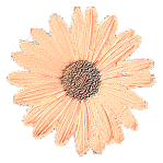 Fried Daisy