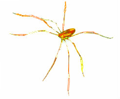 creeky spider