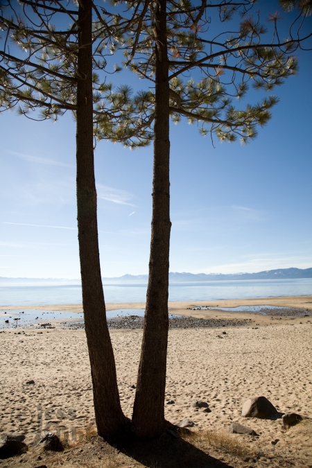Twin trees on the sand at Kings Beach, Tahoe Vista, California