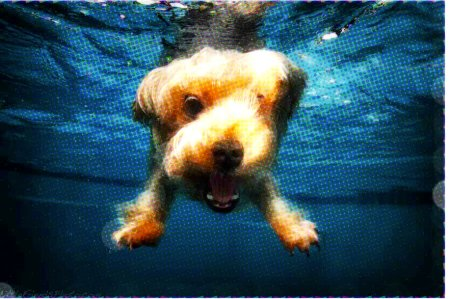 818928_Underwater_dog_yorkie_jpgee467d6f8c063c82785ea52e1b6f5cb5