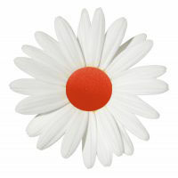 daisy clown nose.jpg